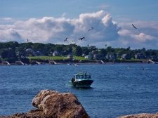 Maine Lobster Boat And Gulls